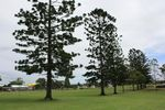 Nesbitt Park Memorial Trees 2