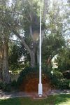 Airforce Assn Plaque & Flagpole : 11-03-2014