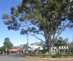 Fig Tree Roundabout : 19-June-2013