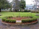 Peace Rose Garden : 30-August-2014