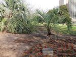 Remembrance Garden Palms : 13-September-2011