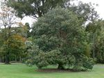 Royal Botanic Gardens Staff Memorial Tree : 16-November-2011
