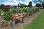 Mary MacKillop Rose Garden : June 2014