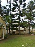Memorial Pines : 30-05-2014