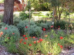 Memorial Garden : 18-December-2014