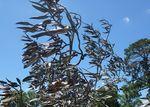 Tree at Whittlesea : 30-November-2013