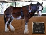 Clydesdale Horse & Memorial Plaque : 2-August-2014