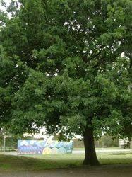 Memorial Tree 2 : 30-October-2014