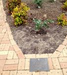 Bill Skewes Memorial Garden : November 2013