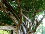 Tree Closeup : 27-05-2014